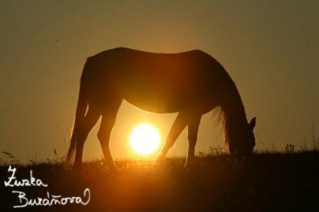 Koníci a Poníci - Fotoalbum - Koně na podzim - 1438 8b7dad9db8